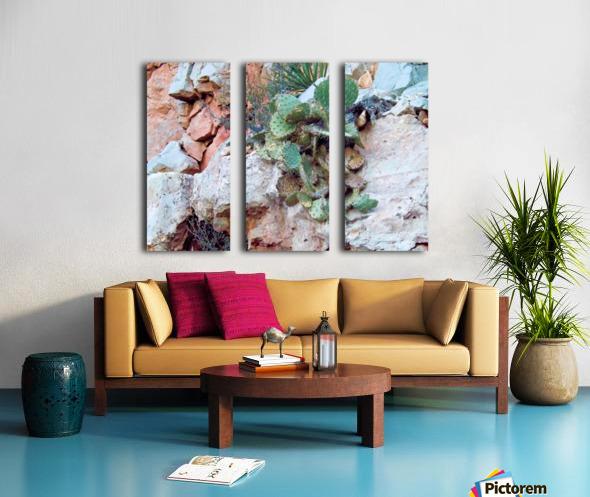 Cactus Split Canvas print