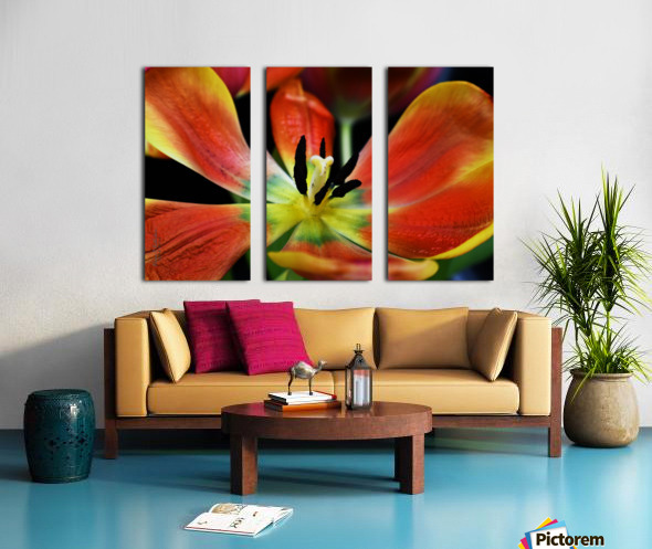 Tulip 2 Split Canvas print