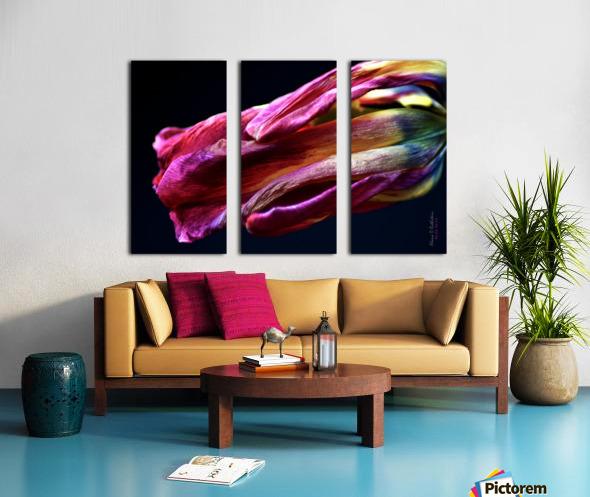 Tulip 3 Split Canvas print