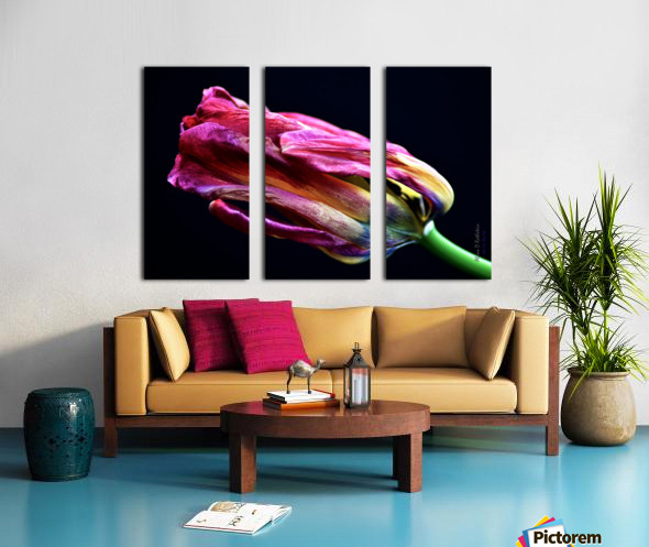 Tulip 4 Split Canvas print