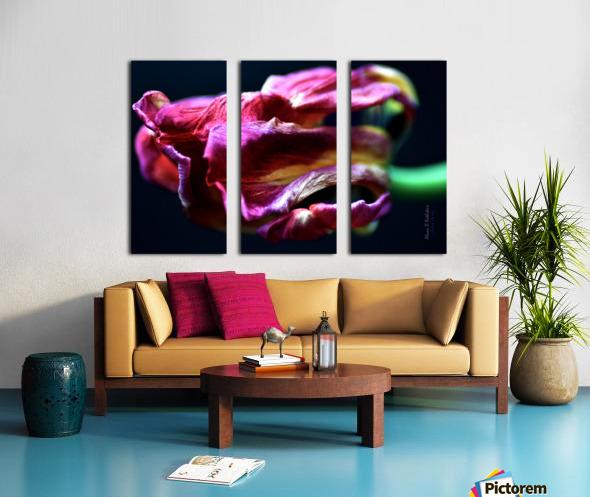 Tulip 5 Split Canvas print
