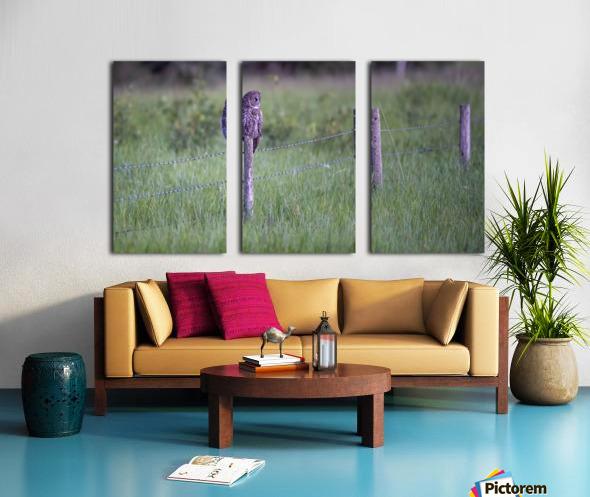 0077 - Great Grey Owl Fence Line Hunter Split Canvas print