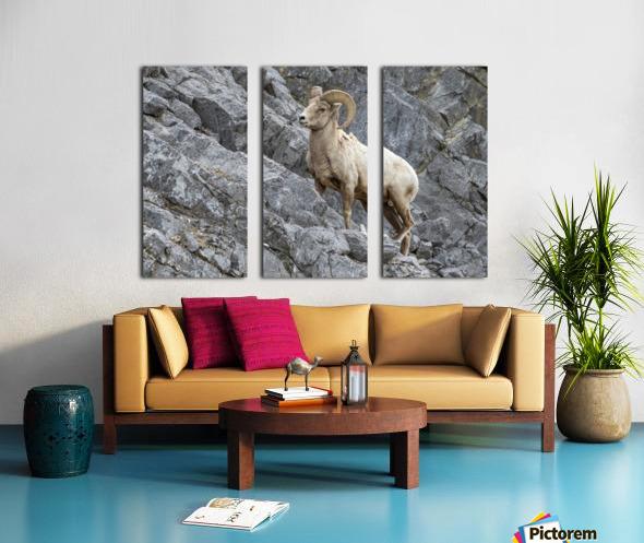 8016 - Big Horn Sheep Split Canvas print