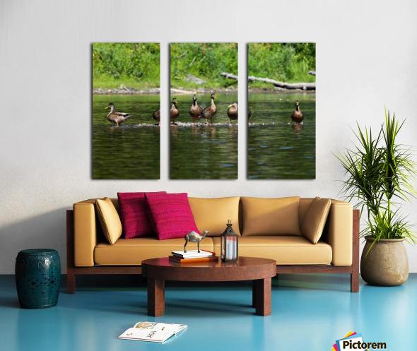 What the duck Split Canvas print