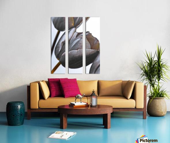 Tulip flowers on white background Split Canvas print