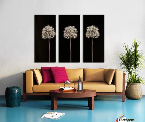 Three allium flowers Split Canvas print