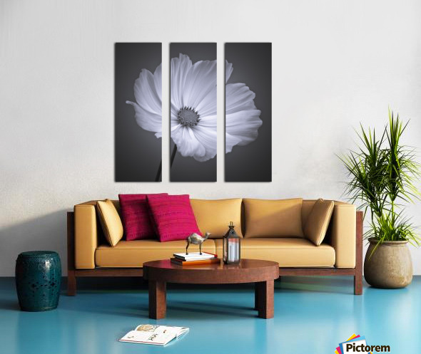 Cosmos flower Split Canvas print