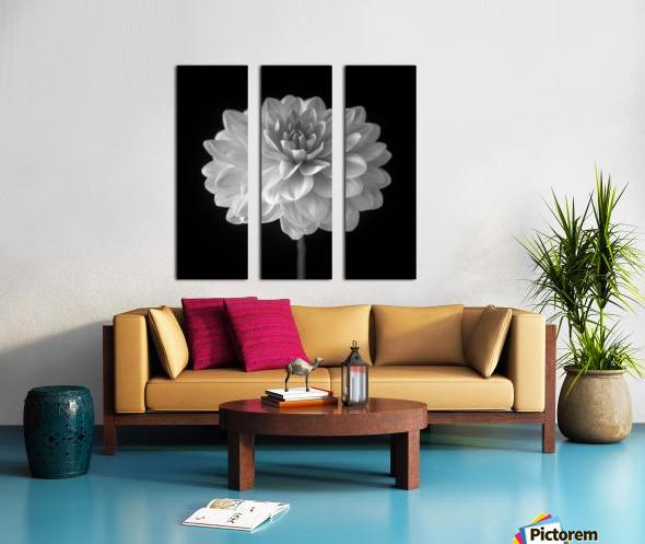 Dahlia flower on black background Split Canvas print