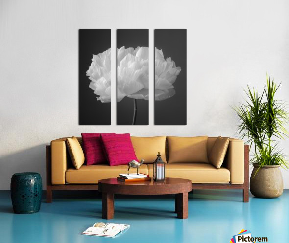 Peony flower Split Canvas print