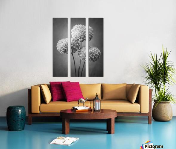 Three Dahlia flowers Split Canvas print