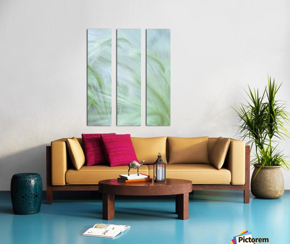 Wild grass Foxtail Barley Split Canvas print