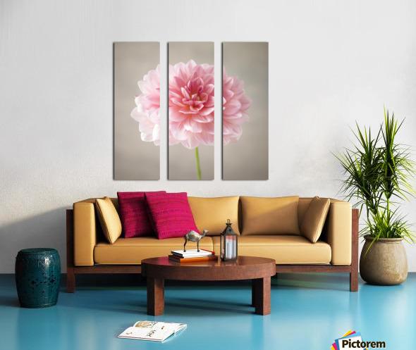 Dahlia flower on colored background Split Canvas print