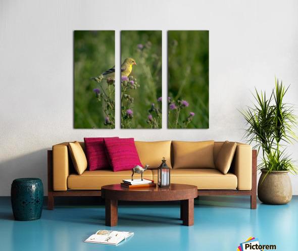 Goldfinch Female Split Canvas print