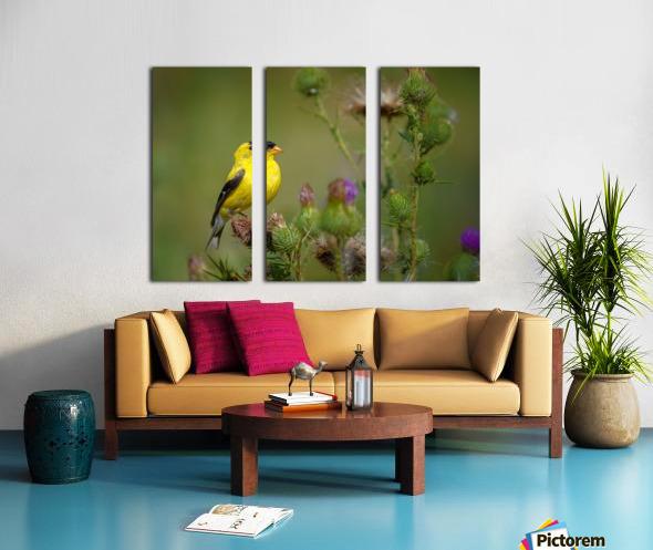 Goldfinch Male Split Canvas print
