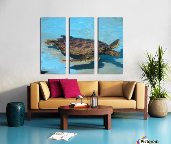 Sea Turtle - Natural World Kids Gallery Split Canvas print