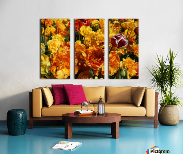 Tulips of the Netherlands 2 of 7 Split Canvas print
