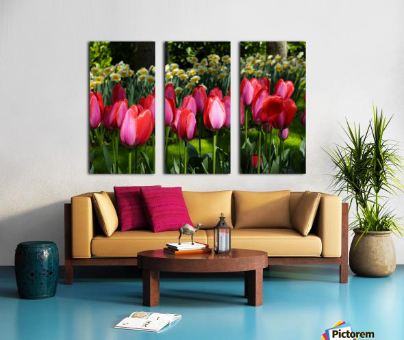 Tulips of the Netherlands 4 of 7 Split Canvas print
