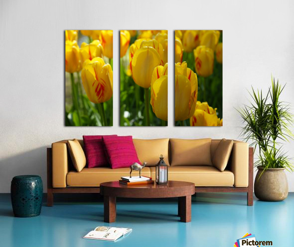 Spring Blooms of Holland 1 of 8 Split Canvas print