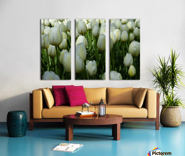 Spring Blooms of Holland 2 of 8 Split Canvas print