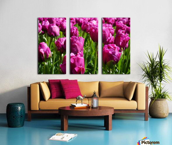 Tulips of the Netherlands 7 of 7 Split Canvas print