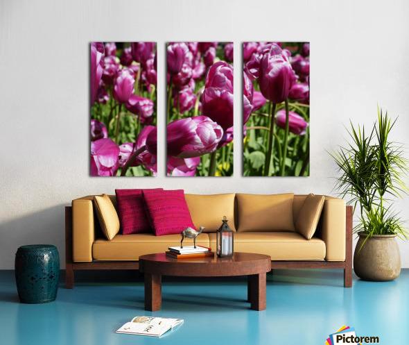 Purple Split Canvas print
