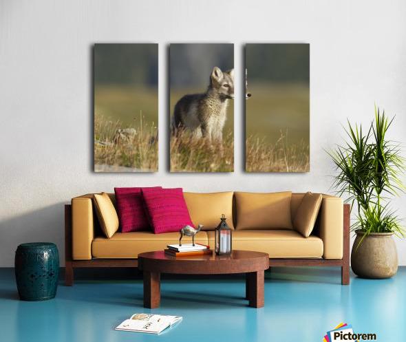 Arctic Fox Puppie by Karen Kolbeck  Split Canvas print