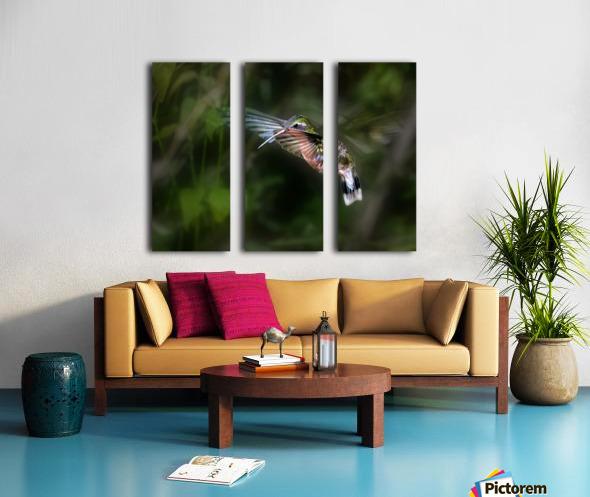 Hummingbird 1B by Leigh Pelton  Split Canvas print