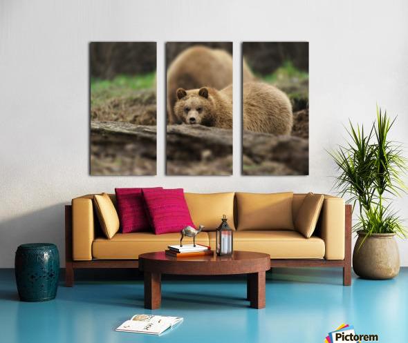 Grizzly Bear Split Canvas print