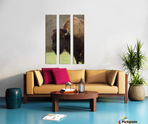 North American Buffalo Split Canvas print