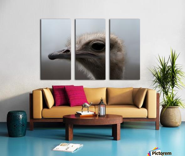 Ostrich Split Canvas print