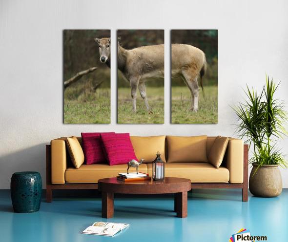 Reindeer Split Canvas print