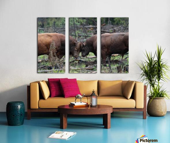 Bulls Split Canvas print