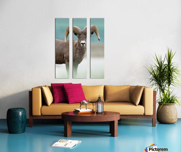 Bighorn Sheep Split Canvas print