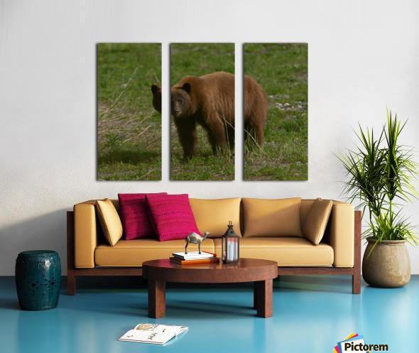 Cinnamon Black Bear Split Canvas print