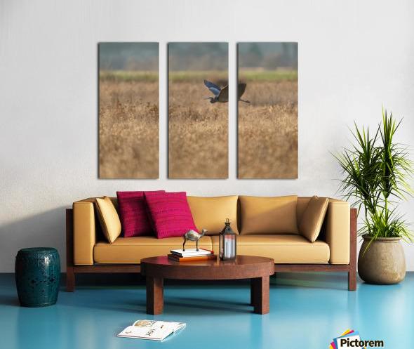 Wesley Allen Shaw 03939 Split Canvas print