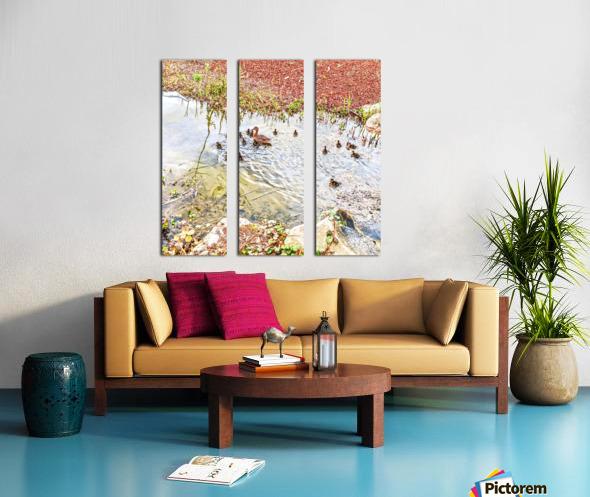 Spring Ducklings Split Canvas print