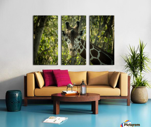 20181104 DSC 0191  3  Split Canvas print