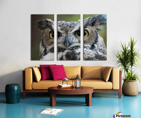 Owl  5 Split Canvas print