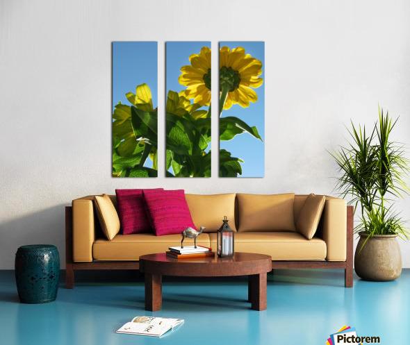 Summer Sky Flowers 8 AUG 2020 Split Canvas print