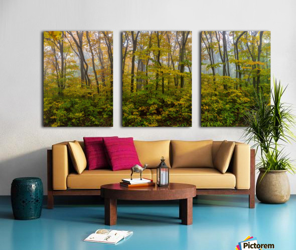 Colors of Nature apmi 1857 Split Canvas print