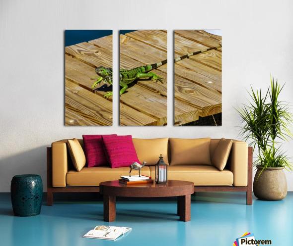 Cayman Green Iguana On Alert Split Canvas print