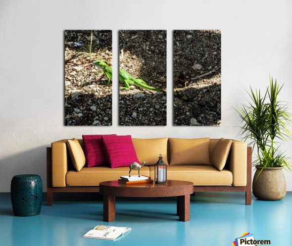 Cayman Young Green Iguana  Split Canvas print