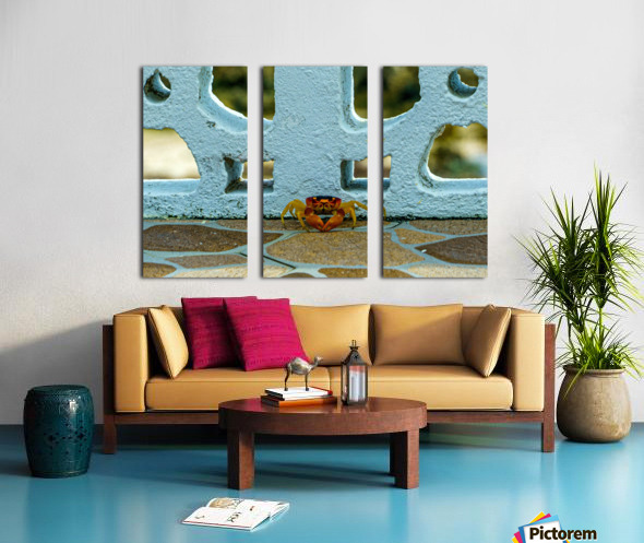 Cayman Crab Split Canvas print