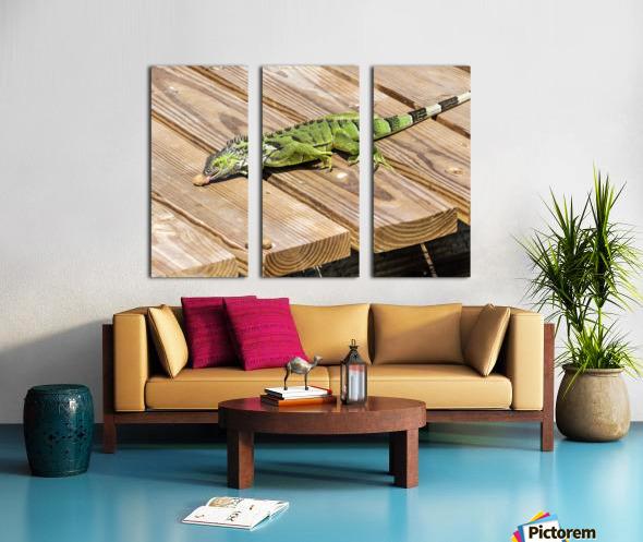 Cayman Green Iguana Snacking Split Canvas print