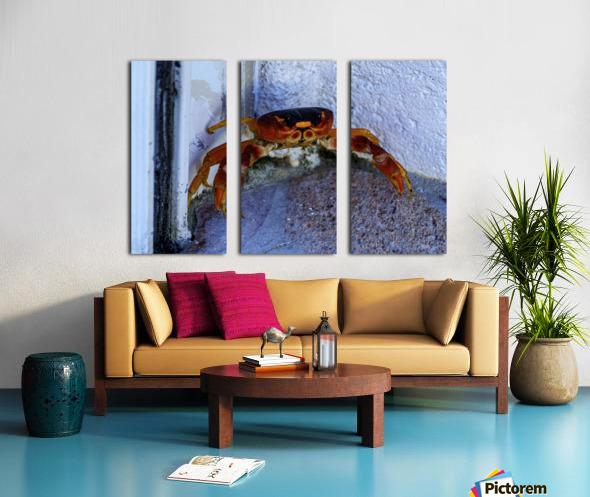 Cayman Cornered Crab Split Canvas print