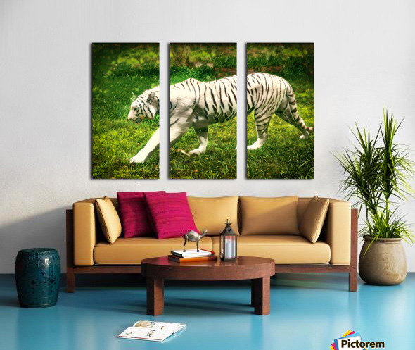 White Bengal Tiger Split Canvas print