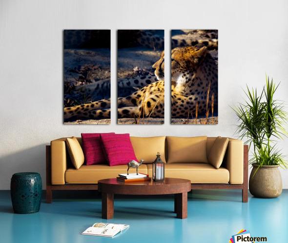 Cheetah Split Canvas print