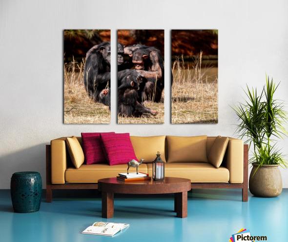 Chimpanzee Family Split Canvas print