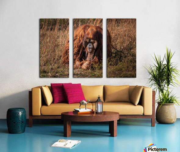 Orangutan Split Canvas print