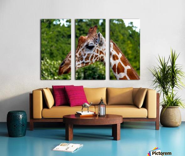 Reticulated Giraffe 1 Split Canvas print